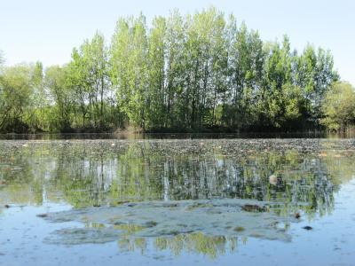 View across Radley Lake