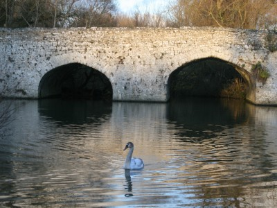 Swans Holiday