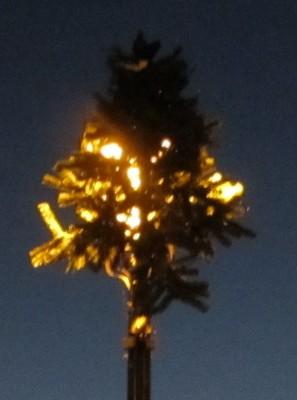 solar powered Christmas Trees