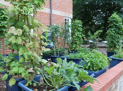 Incredible Edible Abingdon - Year 2