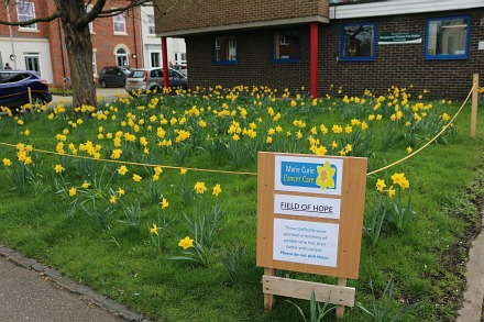 Marie Curie daffodils at the Fire Station