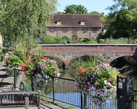 August Abingdon in Bloom