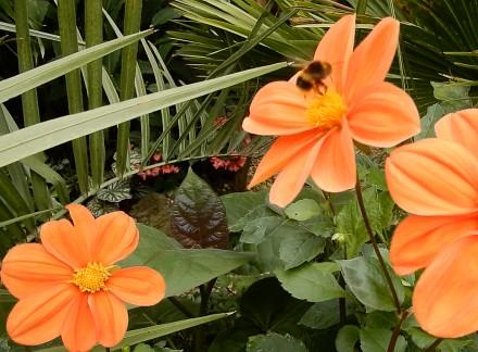 Steves Exotic Gardens