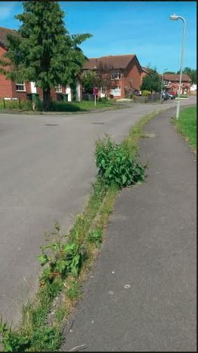 Weeds weeds weeds