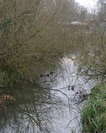 Mill Stream partially cleared