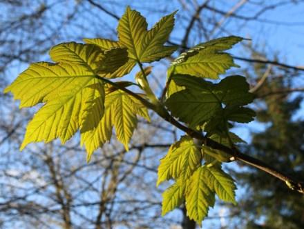 Sunshine on New Leaves