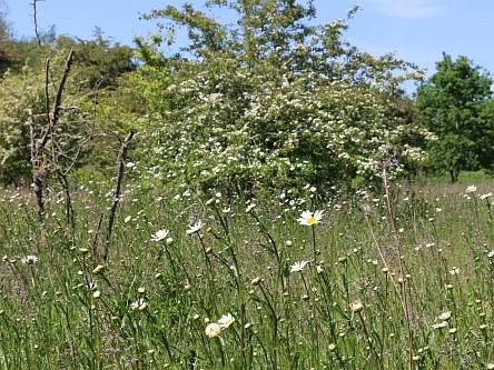 Barton Fields in May