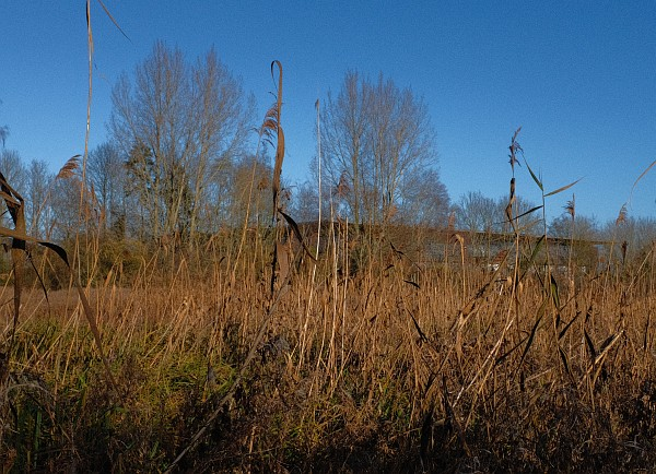 Barton Fields December