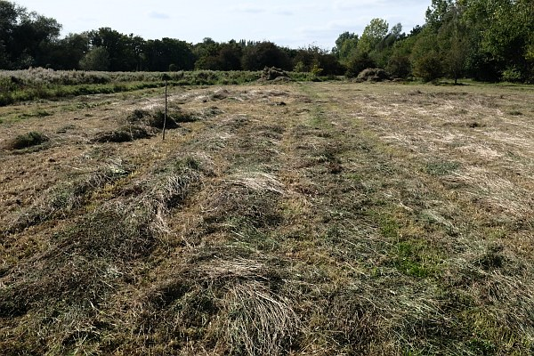 Barton Fields - September