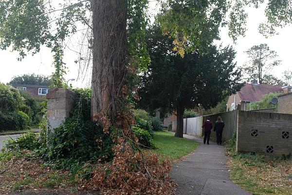 Tree bits dropping off in Fitzharrys estate