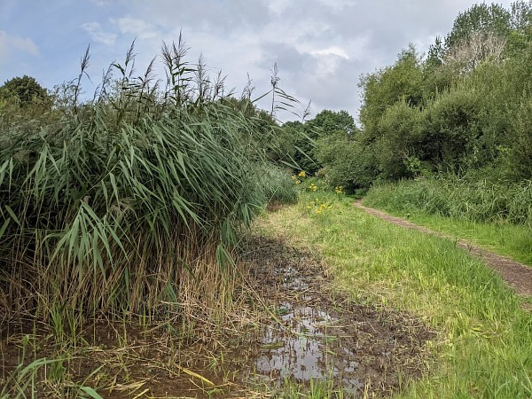 Abbey Fish Ponds - August 2021